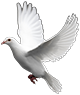 White Dove in Flight graphic